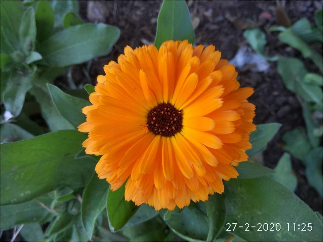 sobresalientes flores